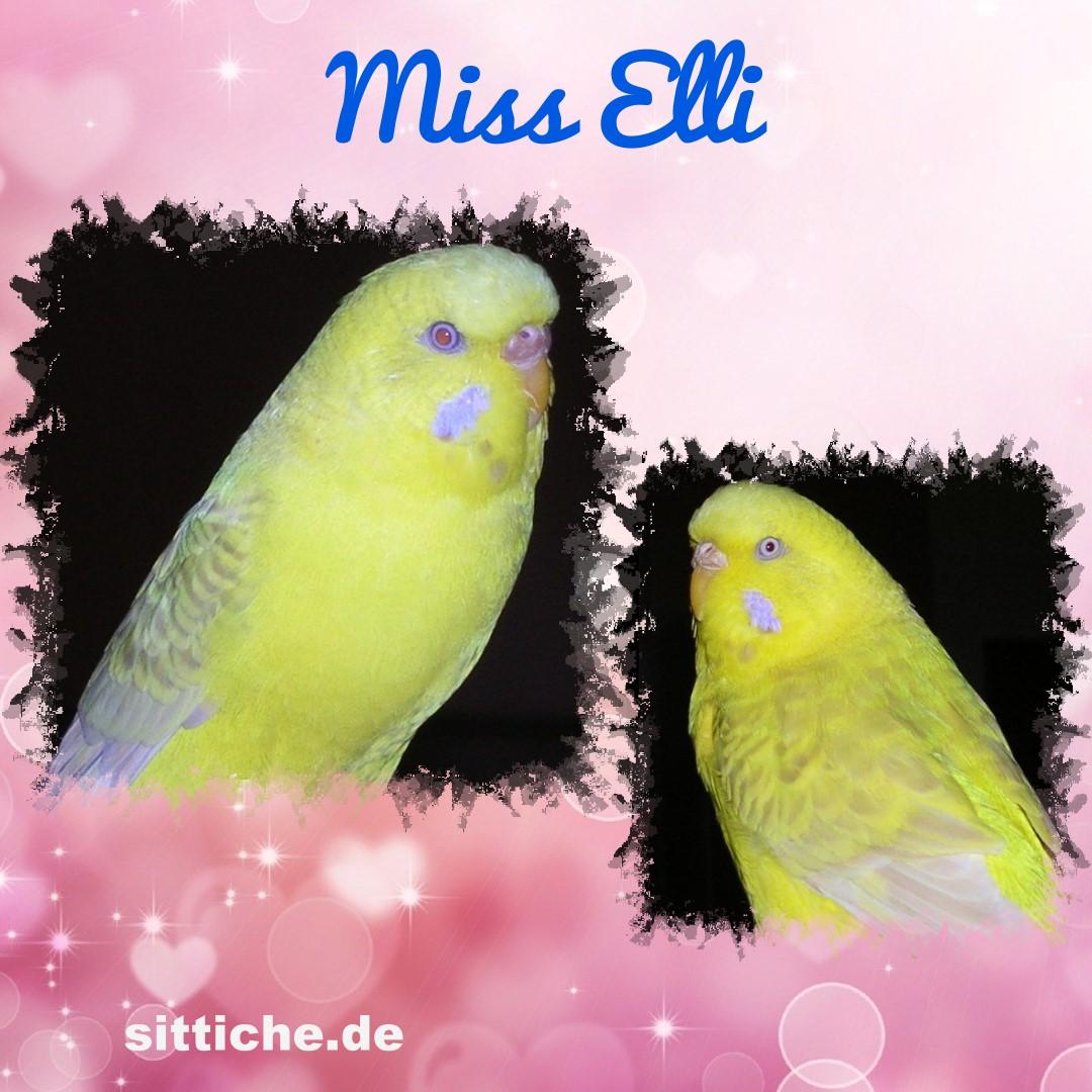 Miss Elli - die Freundliche