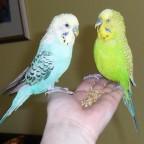 Heiko und Robby