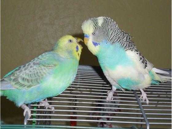 Schnucki und Lenny