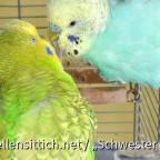 Robby und Heiko im Käfig