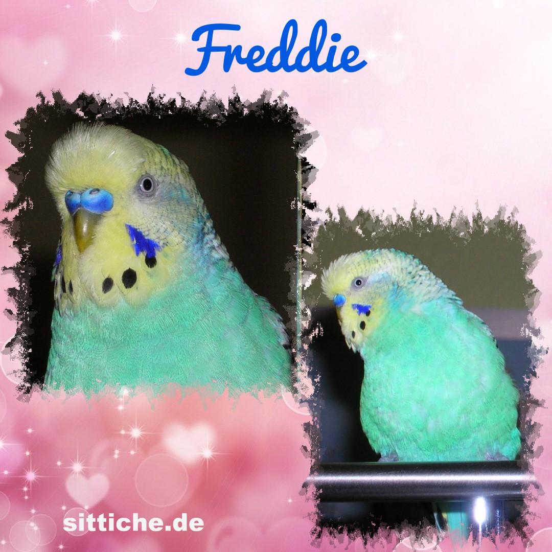 Freddie, my Teddy, my Love