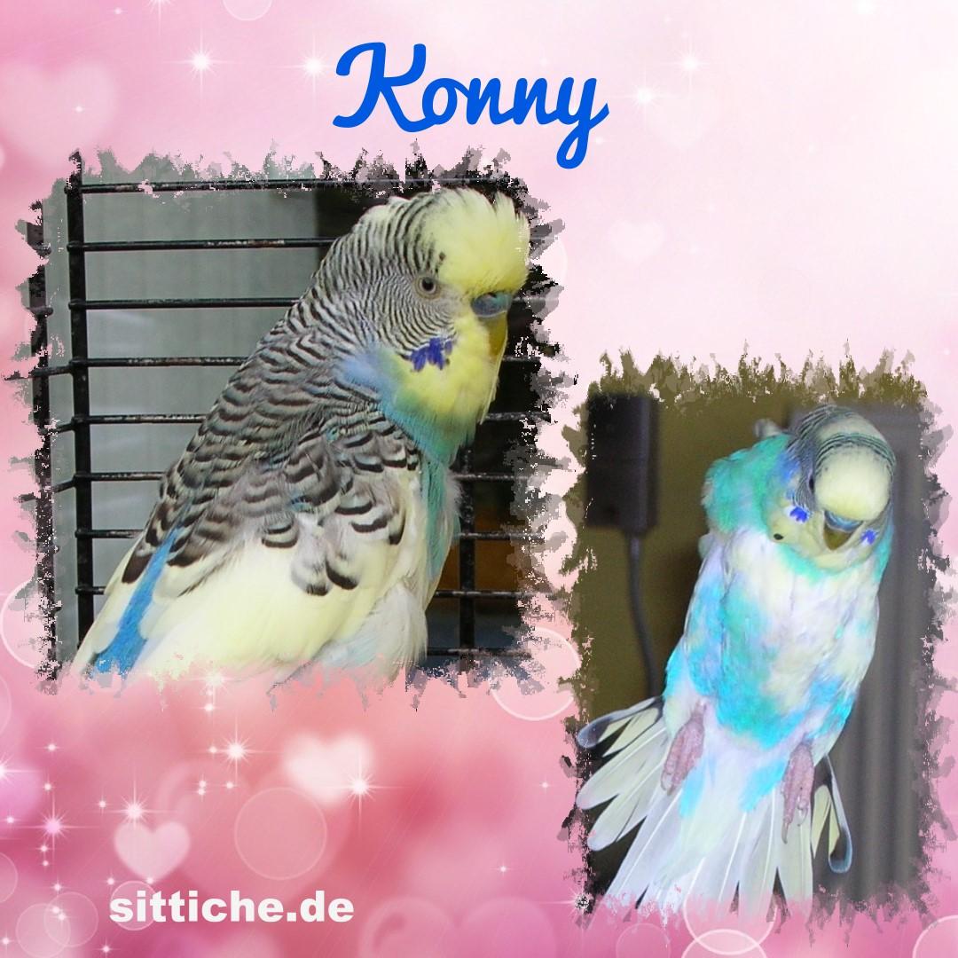 Konny, die kleine Bangebuchse