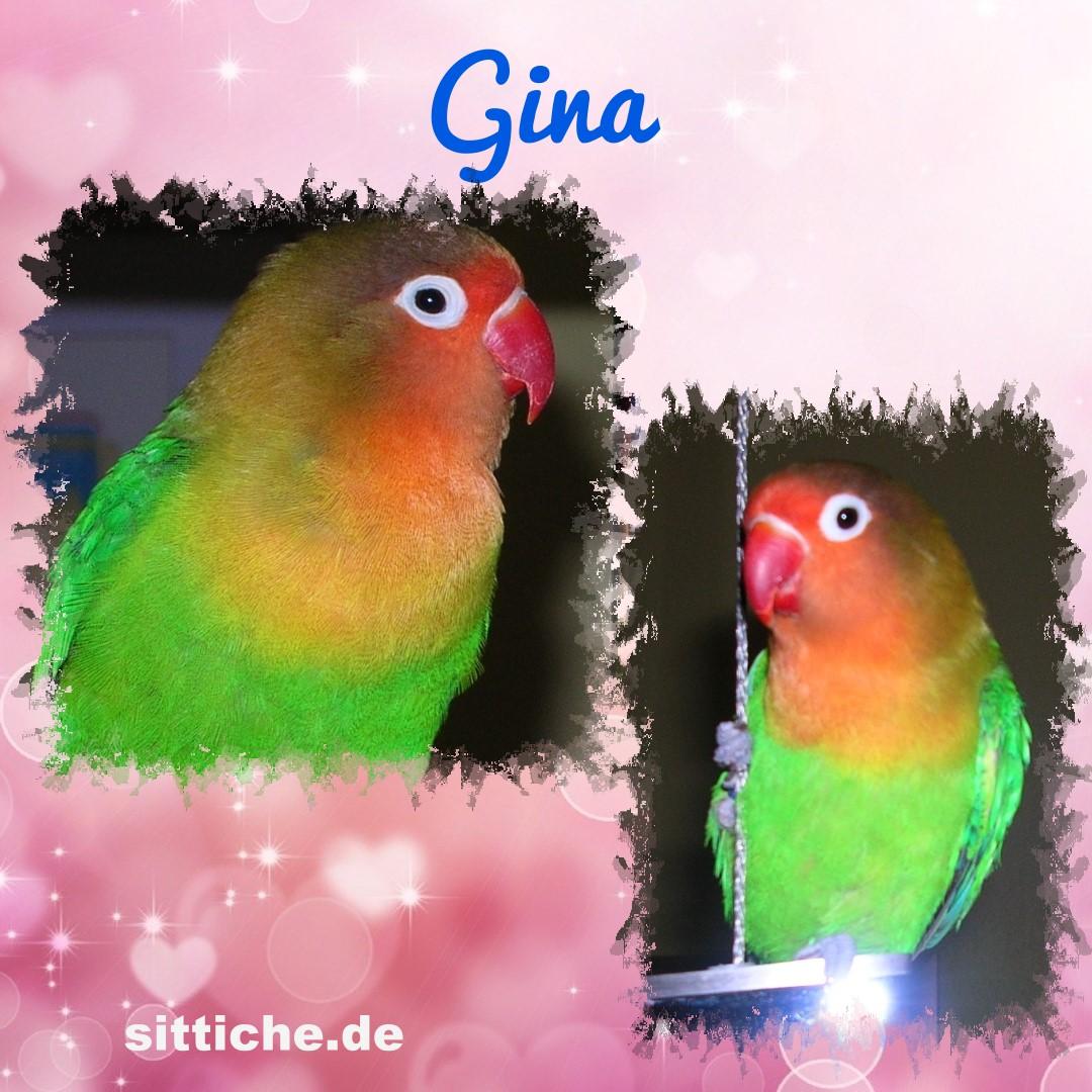 Gina - die Ausbrecher-Königin